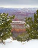 зима каньона Аризоны грандиозная Стоковая Фотография
