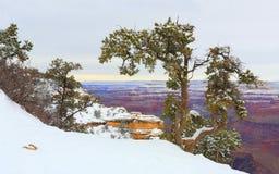 зима каньона az грандиозная Стоковая Фотография RF
