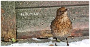 Зима конец вверх стоковое фото rf
