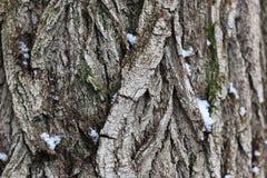Зима коры дерева Стоковые Изображения