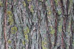 Зима коры дерева Стоковая Фотография RF