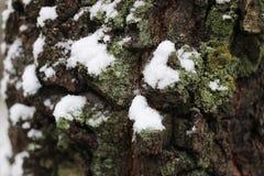 Зима коры дерева Стоковая Фотография