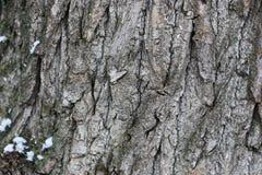 Зима коры дерева Стоковое Изображение