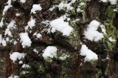 Зима коры дерева Стоковое Изображение RF