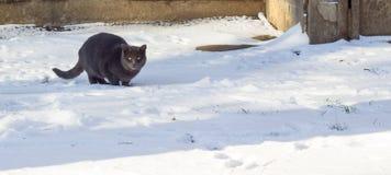 Зима кота outdoors Стоковое Изображение