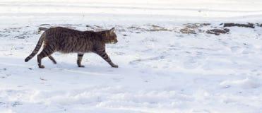 Зима кота outdoors Стоковое Изображение RF