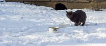 Зима кота outdoors Стоковые Изображения RF