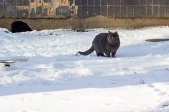 Зима кота outdoors Стоковые Изображения