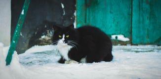 Зима кота outdoors Стоковое Фото