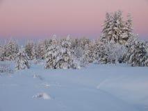 зима ландшафта пущи Стоковое Фото