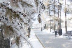 зима ландшафта снежная Морозные деревья в парке города Стоковое Изображение RF