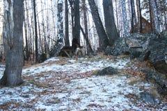 зима ландшафта снежная Стоковая Фотография RF