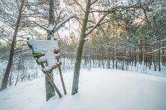 зима ландшафта сценарная стоковая фотография rf