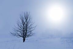 зима ландшафта туманная Стоковая Фотография RF