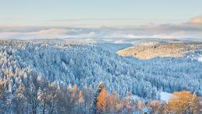 зима ландшафта черной пущи Стоковые Изображения