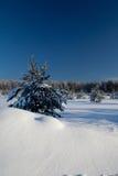 зима ландшафта стоковое фото