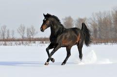 зима лошади залива стоковое фото