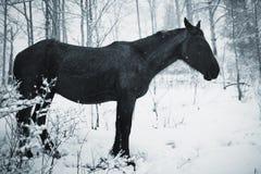 зима лошади пущи Стоковое Фото