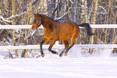 зима лошади стоковая фотография