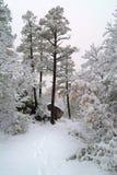 зима места Аризоны Стоковые Фотографии RF