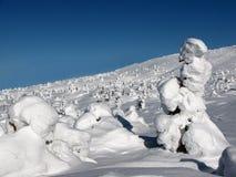 зима места Стоковое Фото