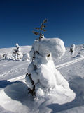 зима места Стоковые Изображения RF