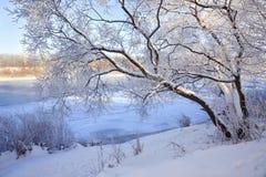 Зима морозная стоковые изображения rf
