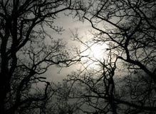 зима неба Стоковое Изображение RF