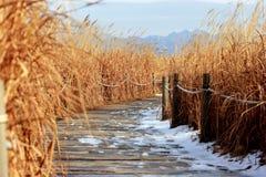 зима неба seoul парка Стоковое фото RF