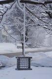 Зима нет для птиц Стоковое Изображение