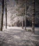 зима ночи ландшафта Стоковое Изображение