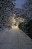 зима ночи Стоковое Фото