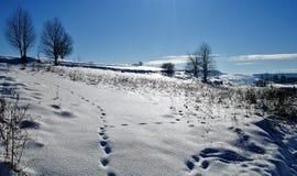 зима дня чудесная Стоковая Фотография RF