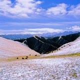 зима овец Стоковая Фотография RF