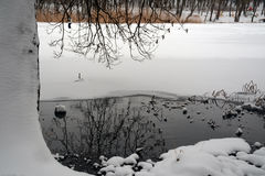 зима озера льда рыболовства Хобот дерева в снеге Стоковые Фотографии RF