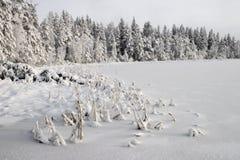 зима озера Стоковое Изображение
