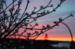 зима окна захода солнца форточки hoarfrost вечера Стоковые Изображения RF