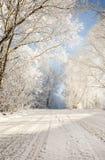 зима дороги пущи снежная стоковое фото rf