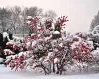 зима палитры Стоковые Изображения