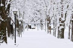 зима парка майны Стоковое Изображение