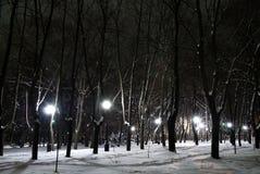 зима парка ночи города Стоковые Изображения