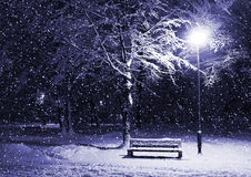 зима парка ночи Стоковое фото RF