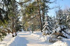 зима парка солнечная Стоковое фото RF