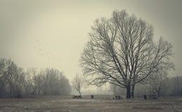 зима парка стендов Стоковое Изображение