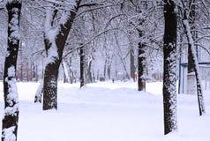 зима парка Стоковые Фотографии RF