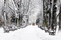 зима парка Стоковое Изображение RF