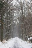 зима пейзажа Польши Стоковые Фото