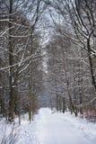 зима пейзажа Польши Стоковые Изображения