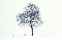 зима пейзажа Стоковое фото RF