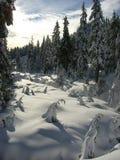 зима пейзажа Стоковое Изображение